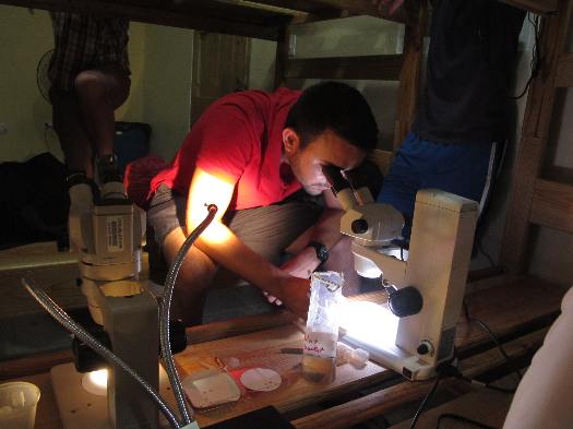 Global Health Education students study chikungunya