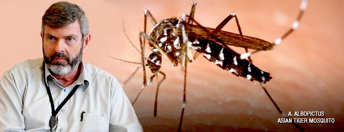 Chikungunya virus may be coming to a city near you - learn the facts