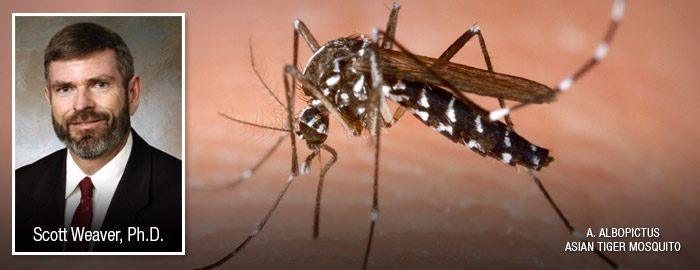 Study shows chikungunya virus mutation places several countries at risk of epidemic circulation