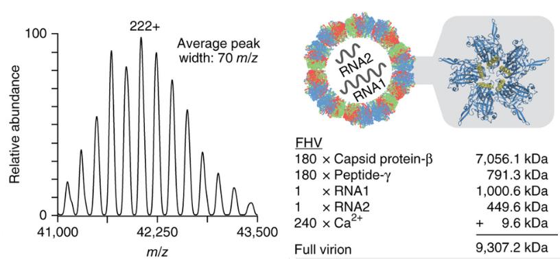 Native Mass Spec of Flock House virus
