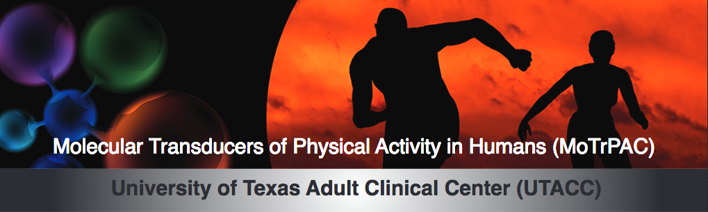 Molecular Transducers of Physical Activity Consortium -University of Texas Adult Clinical Center banner image with molecules and people exercising