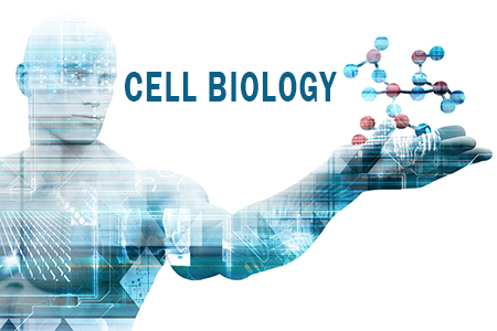 Link to Cell Biology Graduate Program
