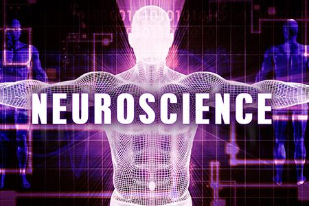 Graduate Programs at NCBA | Neuroscience, Cell Biology and Anatomy ...