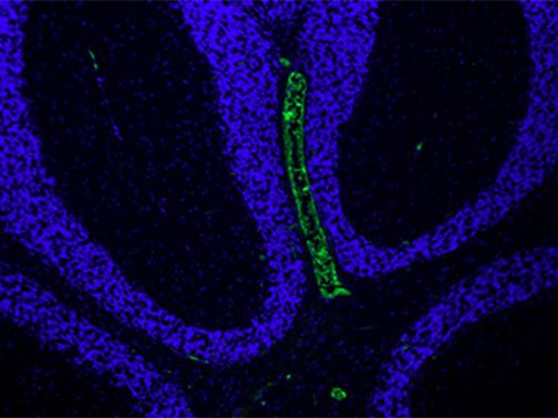 Pathology Microscope Imaging Core Lab_image