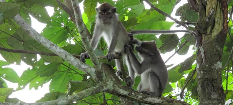 Macaques _Nikos_Lab
