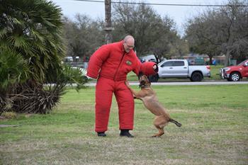 Lt. Ryan Erwin wears a padded bite suit during one of Noey's training sessions.