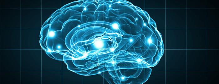 neuroscience_11-17-16.10.08.26