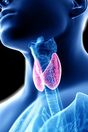 thyroid illustration